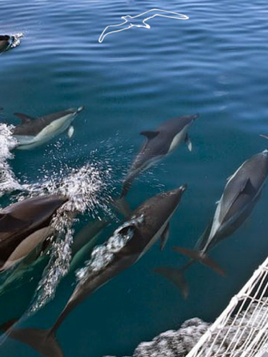 #5 I delfini